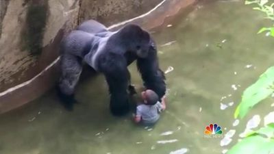 Gorilla child
